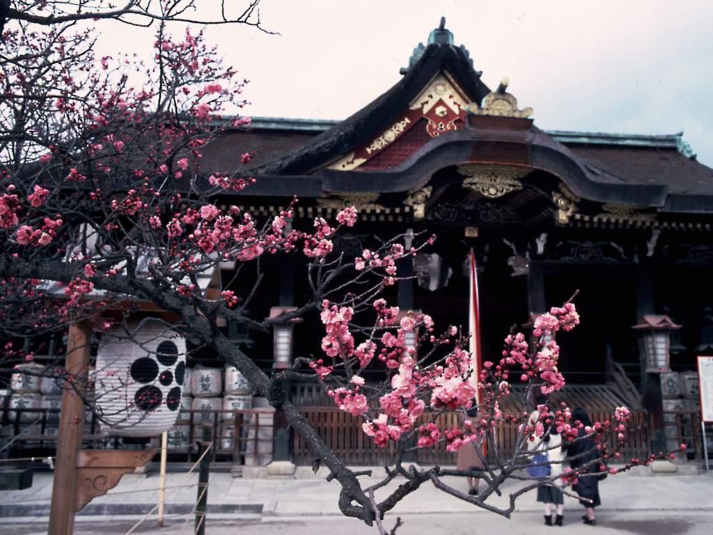 Население японии составляет около 126